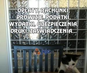 Opłaty, rachunki... i mały kotek