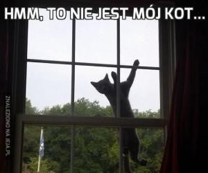Hmm, to nie jest mój kot...