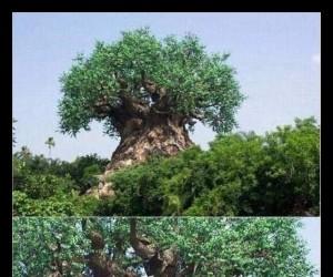 Sztuka z baobabu