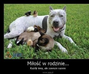 Miłość w rodzinie...