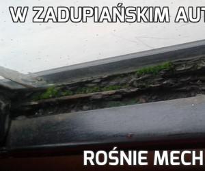 W zadupiańskim autobusie