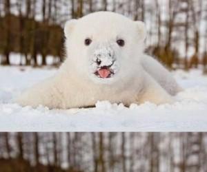 Misio, który lubi śnieg