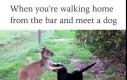 Kiedy wracasz z baru i spotkasz psa