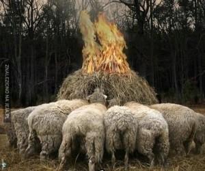 Uwaga, szukamy pracownika na stanowisko pasterza