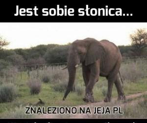 Słonie nie są głupie...