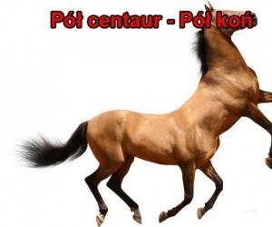 Pół centaur
