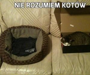 Nie rozumiem kotów