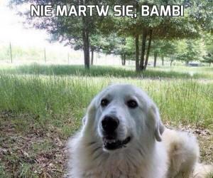 Nie martw się, Bambi
