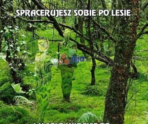 Spacerujesz sobie po lesie