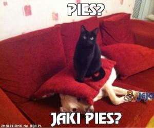 Pies?