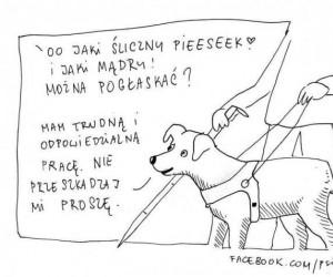 Nie zaczepiaj psa przewodnika