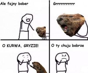 Bóbr aktualnie najpopularniejszym zwierzęciem w Polsce