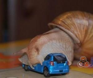 Atak ślimaka