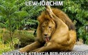 Lew Joachim