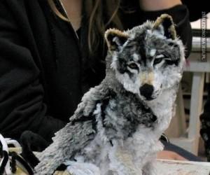 Własnorobny wilk