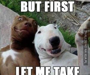 Nawet psy...