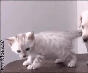 Koteł... Obiecałeś, że koniec z piciem