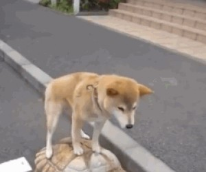 Nowy wynalazek z Chin do transportu psów