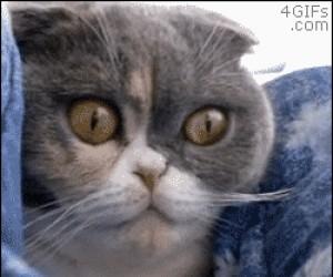 Gdy widzę cycki w internecie