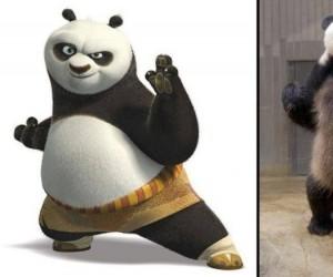 Panda: oczekiwania vs rzeczywistość