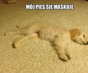 Mój pies się maskuje