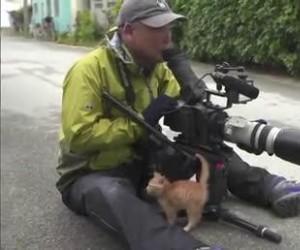 Kotek zaprzyjaźnia się z fotografem