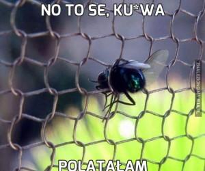 No to se, ku*wa