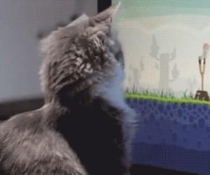 Kot gra w Angry Birds