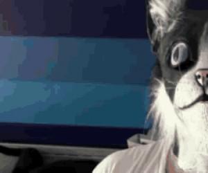 Cześć koty, jestem kot