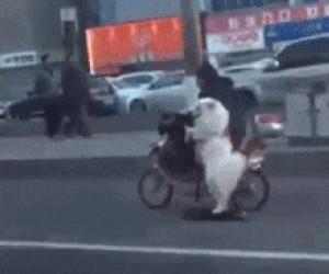 Nowy wymiar spacerowania z psem