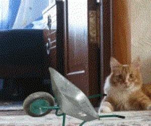 Do roboty, kotek!