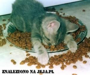 Kocie jedzenie