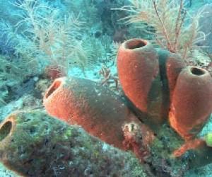 Oddychająca rafa koralowa