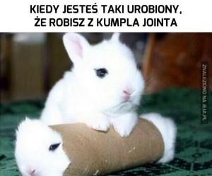 Te króliczki strasznie imprezują