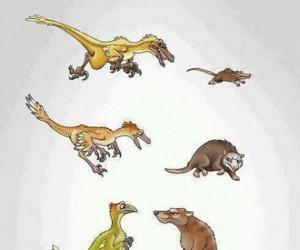 Ewolucja w świecie zwierząt