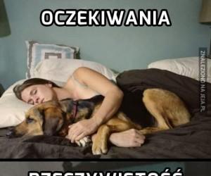 Spanie z psem w jednym łóżku...