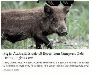 Thug Life, świnio!