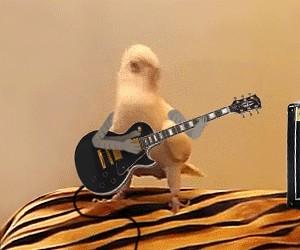 Kurczak z gitarą