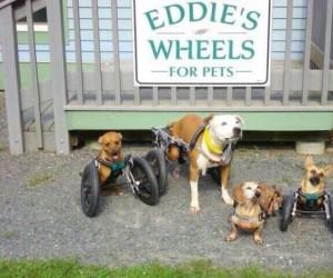 Kółka dla niepełnosprawnych psiaków