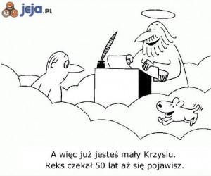 Psy są zawsze wierne