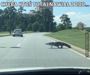 Chyba ktoś tutaj nawiał z zoo...