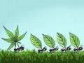 Dlaczego mrówki tak chętnie pracują?
