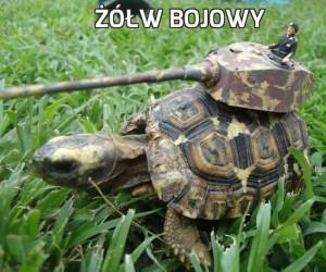 Żółw bojowy
