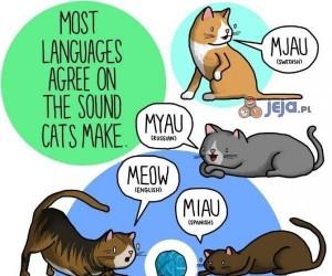 Jak miauczą koty w różnych krajach?