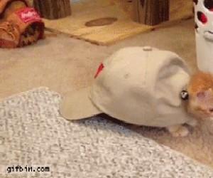 Jak zrobić żółwia ze swojego kota