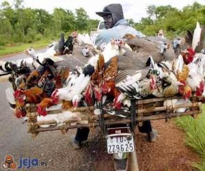 Mistrzowie załadunku - ptaki