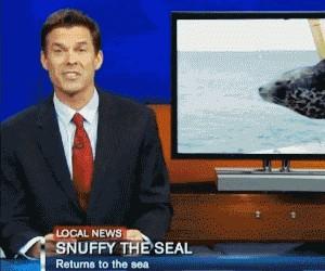 Uwalnianie foki - Byłoby szkoda...