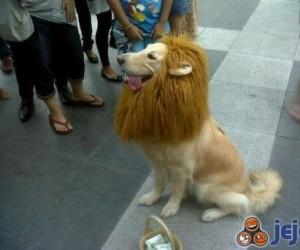 Uwierz mi, jestem lwem