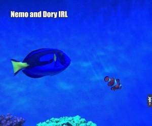 Dory i Nemo