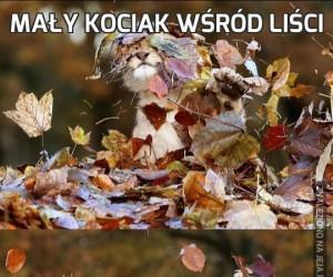 Mały kociak wśród liści